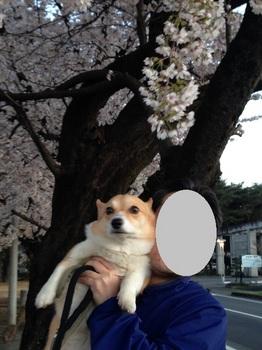 buクラブアップル4月15日 001 - コピー (16).JPG