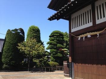 buヒヨコマメ 001 - コピー (13).JPG