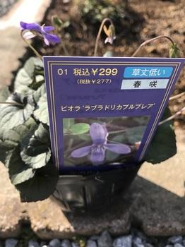 bu原種系シクラメン 001 - コピー (4).JPG