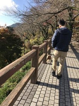 bu太平山紅葉 001 - コピー (12).JPG