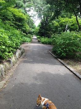 bu東那須野公園 025 - コピー (10).JPG