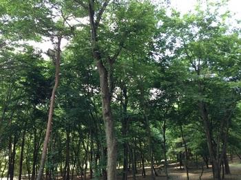 bu東那須野公園 025 - コピー (8).JPG