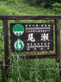 ko2015尾瀬2回目 015 - コピー (11).JPG